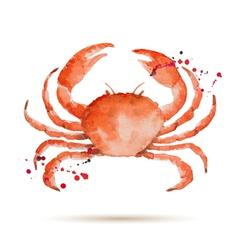 Watercolor crab vector