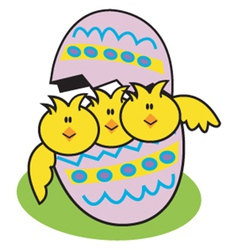 Egg chicks vector image
