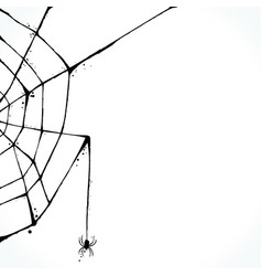 hand drawn spiderweb isolated on white background vector image vector image
