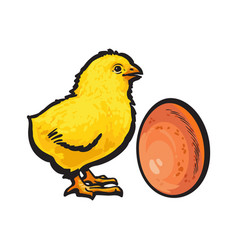 Little newborn chicken and whole brown egg sketch vector