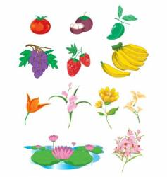 Fruit and vegetable vector