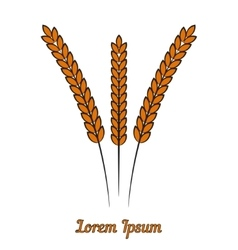 wheat ears on white vector image