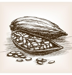 Cocoa beans sketch style vector