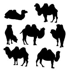 Set of camels vector