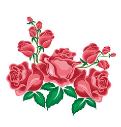 pink roses in cartoon style vector image