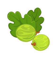 two green gooseberries with leaves isolated on vector image vector image