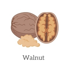 Walnut in Flat Style Design vector image