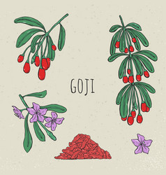 goji on a branch hand drawn set collection vector image