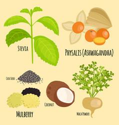 vegetarian superfood healthy vegetable eco food vector image vector image
