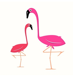 Two flamingo on white background vector