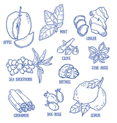 Set of spices berries and fruits vector