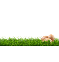 eggs with grass border vector image vector image