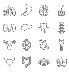 Internal human organs icons set in linear vector image
