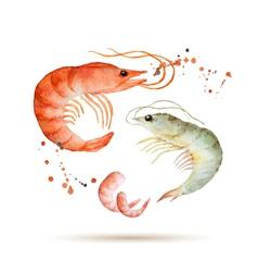 Watercolor shrimp vector