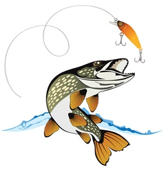 Pike and fishing lure vector