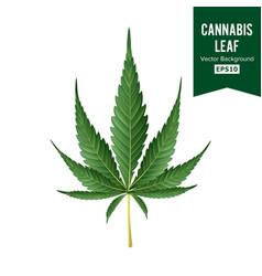 cannabis medical green plant vector image