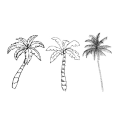 Palm trees on white background vector