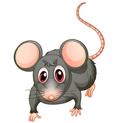 A young mouse vector image vector image