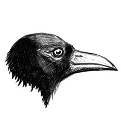 Crow head isolated on white background vector