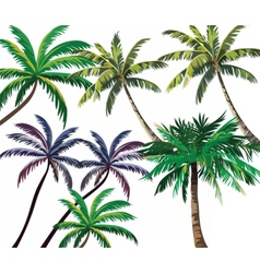 Set of Tropical Palm Trees vector image