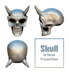 Skull In Three Projections vector image vector image
