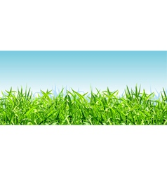 thick bright green grass on a background of blue vector image vector image