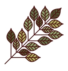 Leaves plant decoration design vector