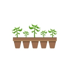 Five plants in pots vector