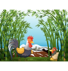 A rooster and a hen at the rainforest vector