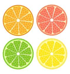 Citrus fruit set vector