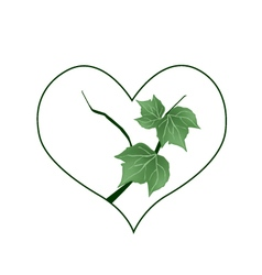 Branch of green leaves in heart shape vector