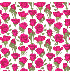 beautiful vintage seamless pattern with roses vector image