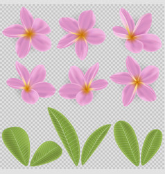 Pink and yellow plumeria flower vector