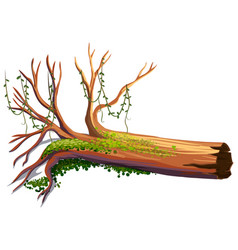 Wood with green vine vector