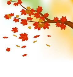 Autumn leaves background vector