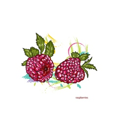 raspberries with colorful splashes vector image