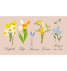 Collection of spring flowers vector image