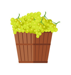Wooden basket with grapes white wine vector