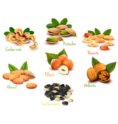 Fresh nuts set vector