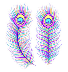 feathers on white background vector image vector image