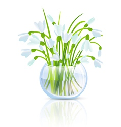 Snowdrop flower vector