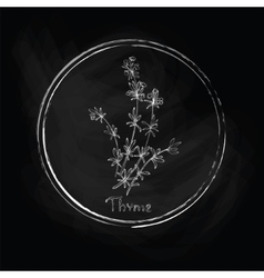 Dark thyme vector