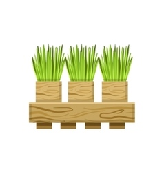 Green onions in crate vector