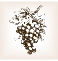 Bunch of grapes hand drawn sketch style vector image vector image