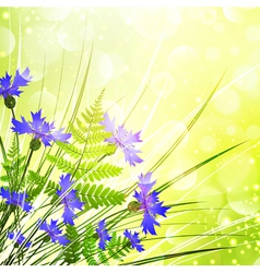 Cornflower vector image vector image