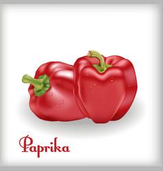 red sweet bulgarian bell pepper vector image