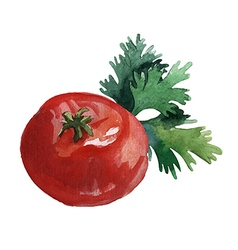 Watercolor vegetables tomato and parsley vector