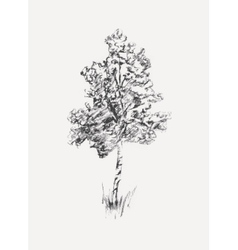 Sketch of birch isolated on white vector