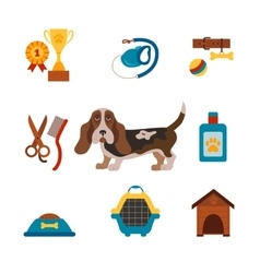 Basset hound dog infografic with dog care isolated vector