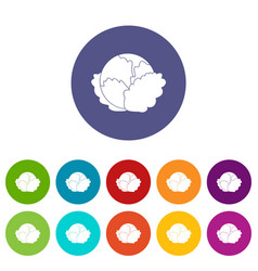 cabbage set icons vector image